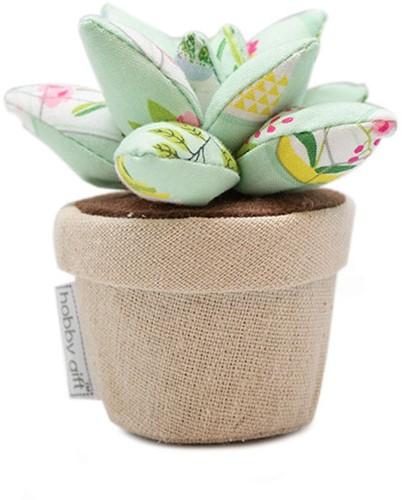 Nadelkissen Plant Life